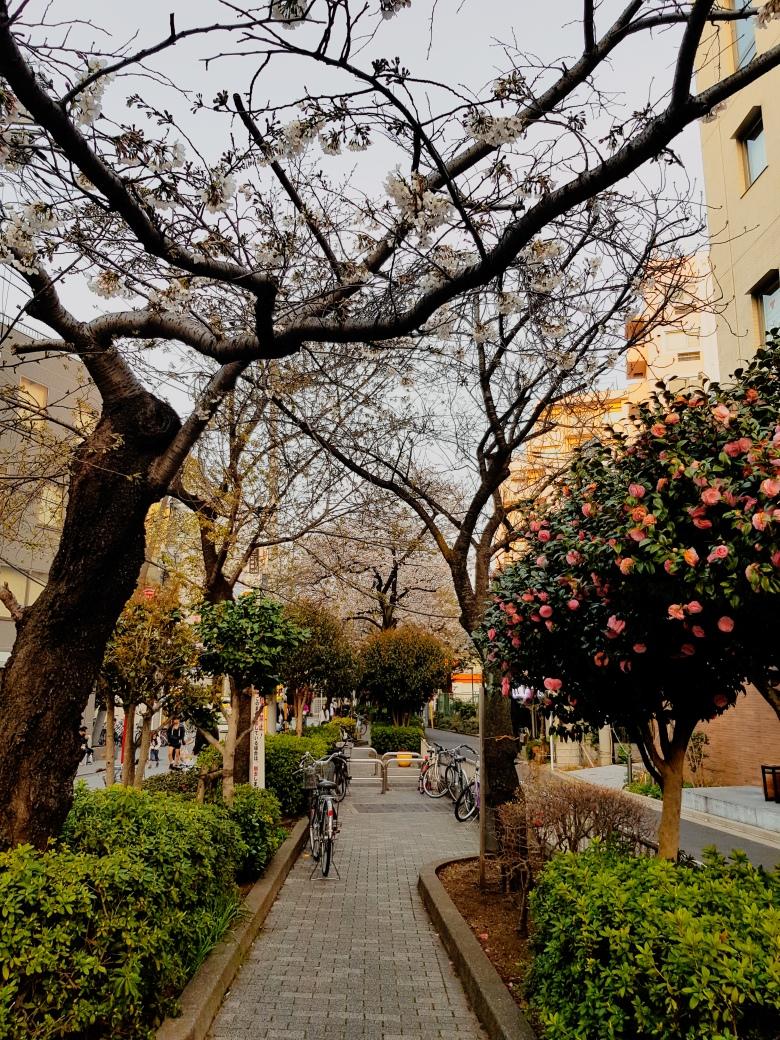 Green Street Jiyugaoka Tokyo Japan